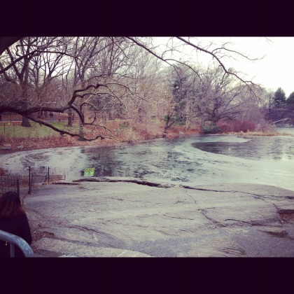 Half frozen pond in Central Park... -11 will do that to you